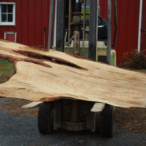 Ambrosia Maple Wood Slabs For Sale
