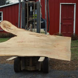 Ambrosia Maple Wood Slabs For Sale